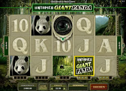 Untamed Giant Panda Screenshot 1
