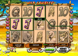 Wild Gambler Screenshot 6