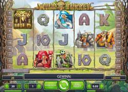 Wild Turkey Screenshot 1